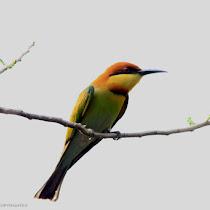 The Birds of Kerala