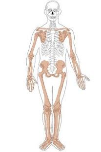 玩免費教育APP|下載解剖阿特拉斯免費。 app不用錢|硬是要APP
