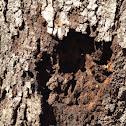 Termite (Nest)