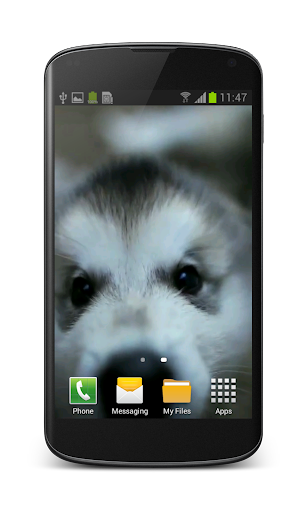Little Puppy Video Wallpaper