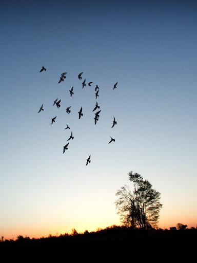 Pigeons Cloud