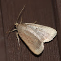 Smooth Amphipyra Moth