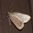 Smooth Amphipyra Moth