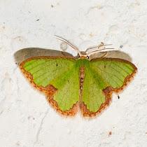 Butterflies and Moths of Ecuador