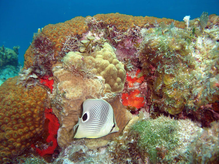 Exploring the reefs of Cozumel by snorkel or scuba is a great way to spend the day.