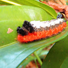 Shag-Carpet Caterpillar