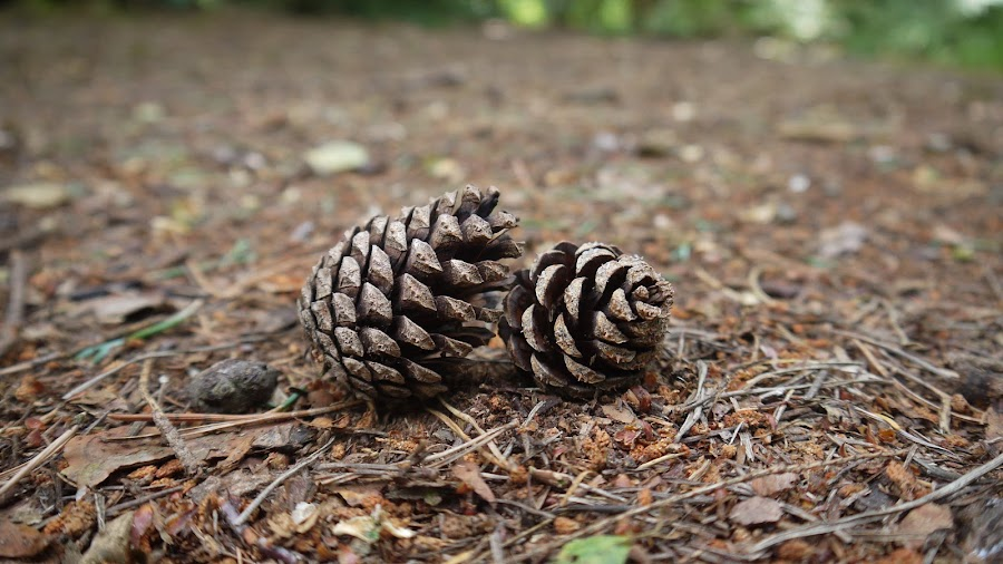 by Andrew Benn - Nature Up Close Other Natural Objects