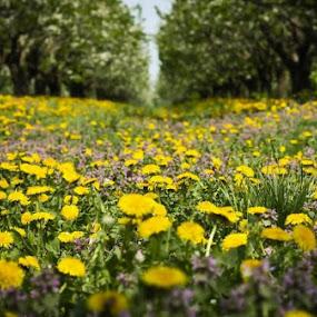 by Otetea Ovidiu - Novices Only Flowers & Plants