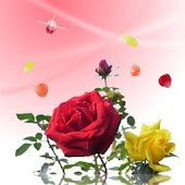 Rose petals - Full