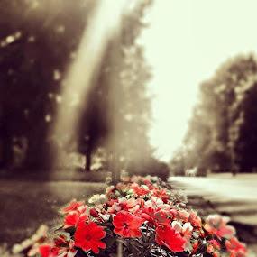 by Samuel Dean - Flowers Flower Arangements