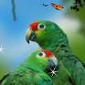 Parrot Love Birds Live Wallpap logo