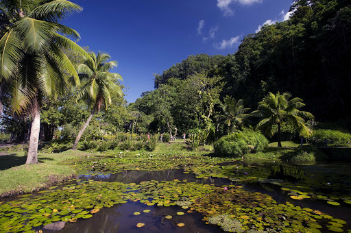The public gardens of Vaipahi on Tahiti offer wonderful views of water, light and exquisite vegetation.