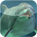 dolphin weather ringtone icon