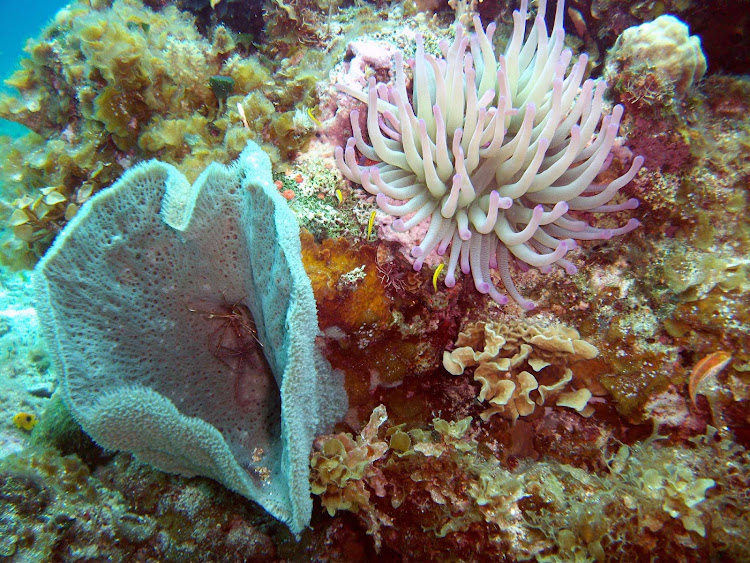 Anemone, coral and sponges are part of the undersea gardens you'll find near Cozumel, Mexico.