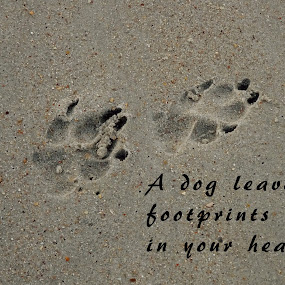 Footprints in your heart by Judy Dean - Typography Captioned Photos ( love, sand, heart, paw, footprint, dog, print,  )