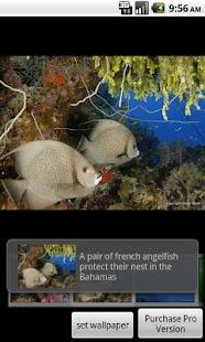 Under the Sea Free screenshot