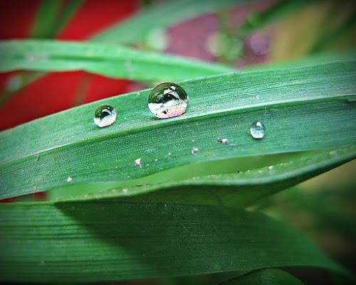 by Delphine Jourdren - Nature Up Close Water ( drops )
