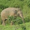 elephant patrol