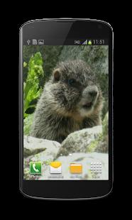Cute Marmot Free 3D Wallpaper- screenshot thumbnail