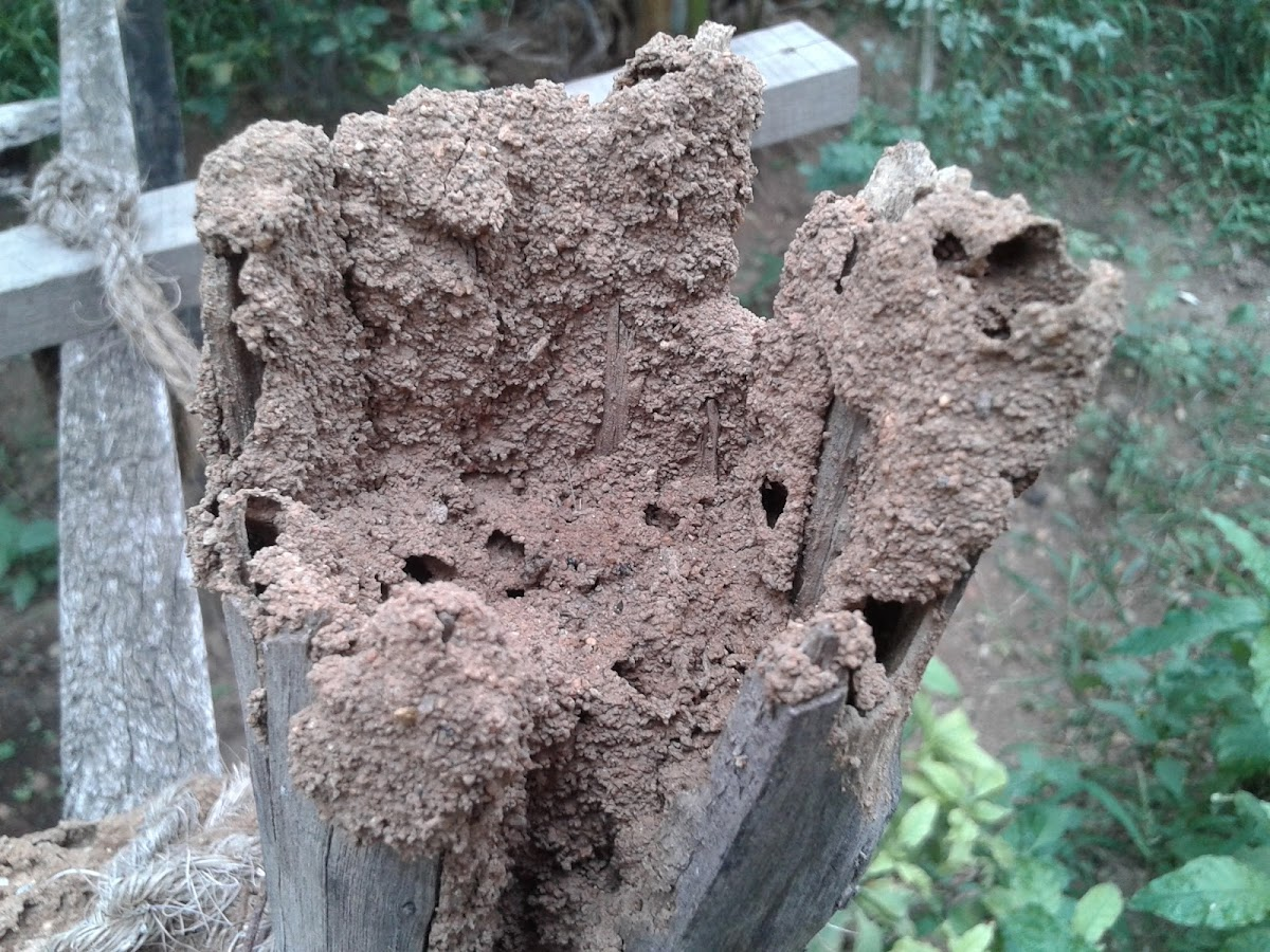 termites house/ ant hill