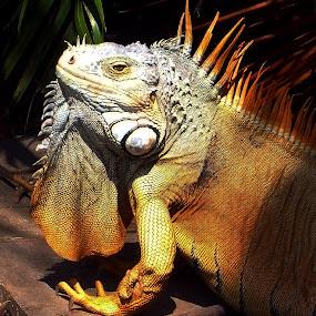 by Luna Sol - Animals Reptiles (  )