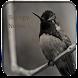 10 grade Biology Notes-Free