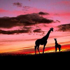 girafe s2.jpg