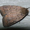 Slowpoke Moth