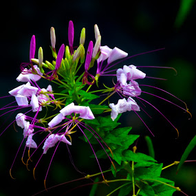Struggle for Life by Don Kuhnle - Flowers Flowers in the Wild ( wildflower, power, virginia, summer flower, flower )