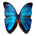 Blue Butterfly Live Wallpaper icon
