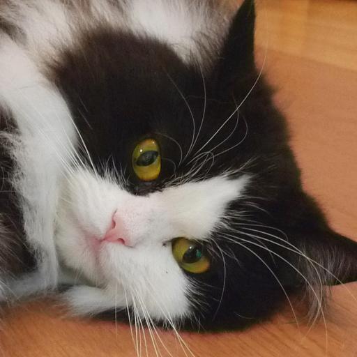 ねこ猫パズル Vol.2 解謎 LOGO-玩APPs