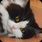 Lovely Cat Puz Vol.2