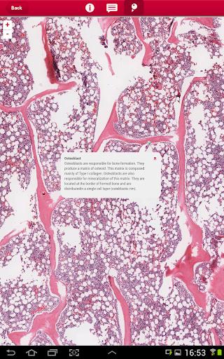 玩免費醫療APP|下載multeBook Histology app不用錢|硬是要APP