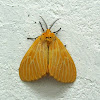 Orange intends lights armyworm