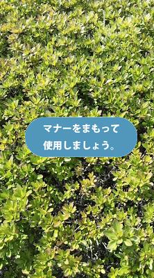 オトナシカメラ(音無、無音) - screenshot