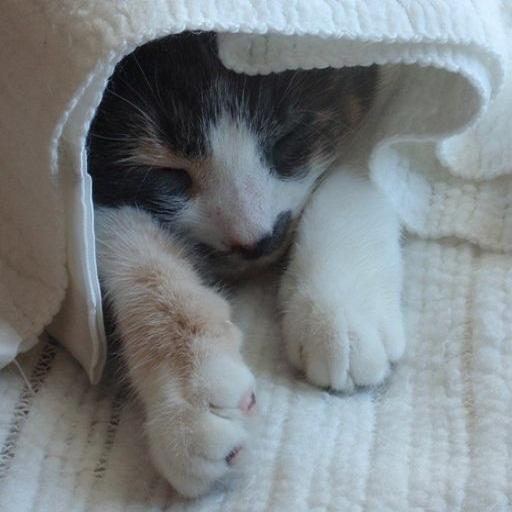 Pocket Kitty  Free