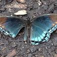 Piedmont Wildlife Center's Biological Inventory