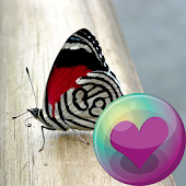 Butterflies HD Wallpapers