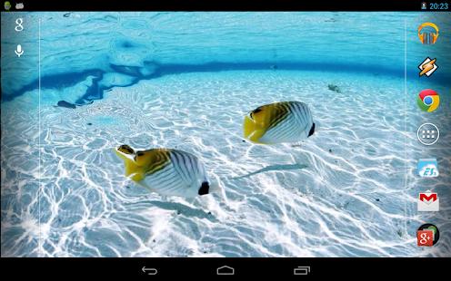 Fishes Near Bora-Bora
