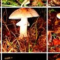Mushrooms! logo