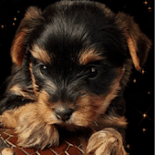 Sweet Puppy Live Wallpapers