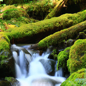 Flowing Green by Jeff McVoy - Landscapes Waterscapes ( water, stream, forrest, wooded stream, green, wooded, moss, trees, flow, forrest stream, woodland stream, renewal, forests, nature, natural, scenic, relaxing, meditation, the mood factory, mood, emotions, jade, revive, inspirational, earthly,  )