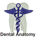 Dental Anatomy Ultimate icon