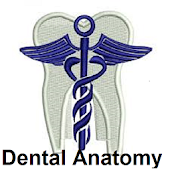 Dental Anatomy Ultimate