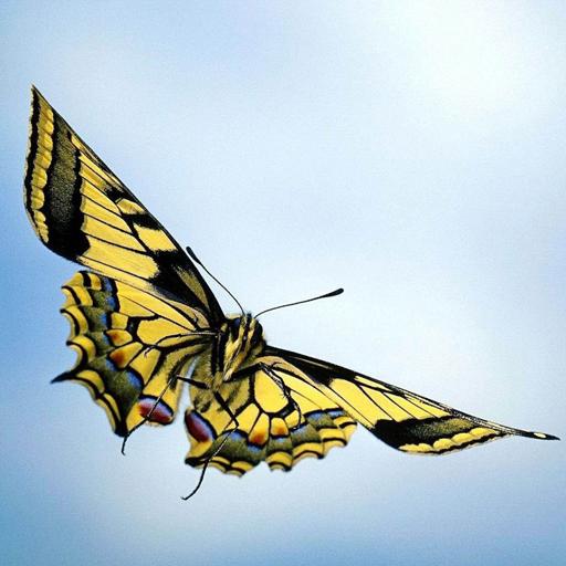 Butterfly Wallpaper App