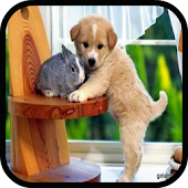 Pet Shop Animals Free Games