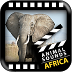 Best African Animals Sound