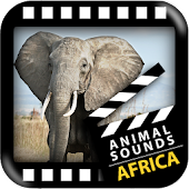 Best African Animals Sound