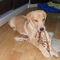 Bruno- 4 luni