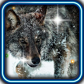 Wolf Angry Free live wallpaper